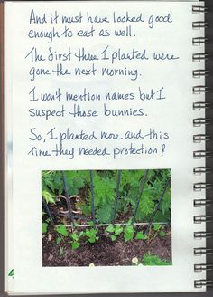 Garden Journal The Story of Morning Glory  Page 4 of 5