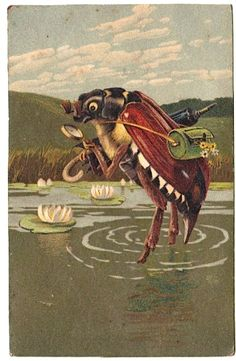 supreme maybug naturalist in a lily pond...