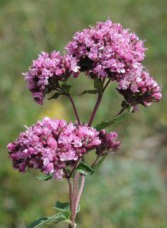 Anything Is Possible, Wonderland, Medical, Herbs, Health, Garden, Plant, Garten, Health Care