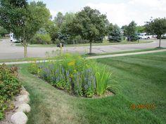 Prairie Gardens & Rain Garden Contractors in Wayne County, MI Prairie Garden, Wayne County, Rain Garden, Sustainability, Sidewalk, Landscape, Green, Plants, Healthy