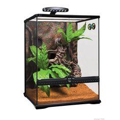 Skrootz Crested Gecko Terrarium Kit Large with Unique Totem Complete Set Terrariums Gecko, Terrariums Diy, Terrarium Reptile, Terrarium Plants, Glass Terrarium, Wild Bird Food, Wild Birds, Crested Gecko Habitat, Exo