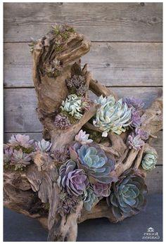 Succulent Rock Garden, Succulent Planter Diy, Succulent Landscaping, Succulent Gardening, Planting Succulents, Planting Flowers, Indoor Succulents, Cacti Garden, Fairies Garden
