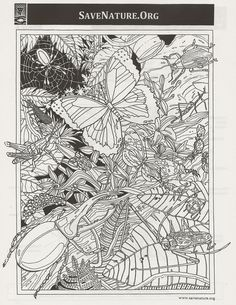 Detailed Coloring Pages For Adults | Save Nature - insect lab - Discover Insects
