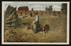 a Kentucky hemp field