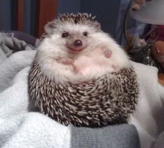 'Jabba The Hedgehog' Wins Star Wars Costume Contest