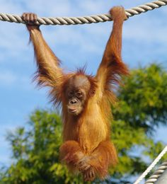 Experience Jungle School at Perth Zoo - Perth - by Vanessa