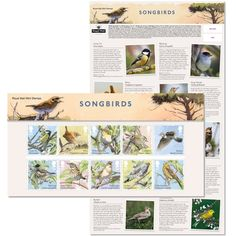 Songbirds Presentation Pack at Royal Mail Shop Royal Mail, Stamps, Presentation, Packing, Shopping, Design, Seals, Bag Packaging, Stamp