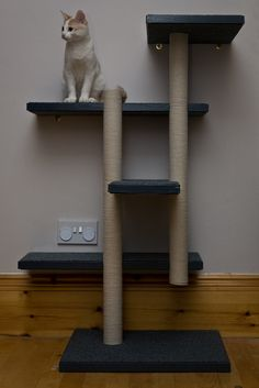 Cat Tree & Milo