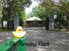 The Duck and the Queens Zoo: The Rubber Ducky Project Week 4