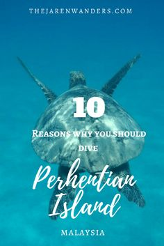 10 reasons why you should dive in Perhentian Island!   Backpacking Malaysia | Travel | Malaysia | Pulau Perhentian | Terengganu | Perhentian Island | Diving | Budget | Backpacker