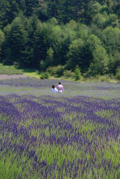 Lavender Farm, San Juan Island.  http://just5moreminutes.com/blog/wp-content/uploads/2012/08/set110.jpg