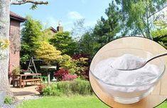 Bikarbonat i trädgården – effektivt till allt från utemöbler till sniglar