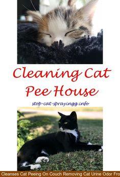 Best Cat Pee Cleaner Cat Pee Kids Cat Peeing In House To