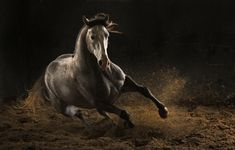 Amazing horse photography