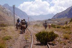 vie quotidienne au pied de l'Aconcagua