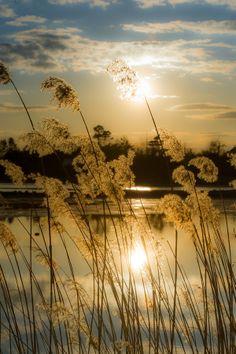 Photo summer memories ... by Jørn Allan Pedersen on 500px