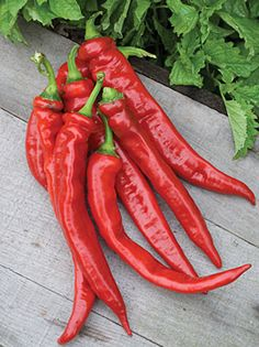 NGB Year of the Sweet Pepper: Enjoy high yields of sweet, smokey-flavored red peppers when you buy Nardella Organic Heirloom Plants at Cooksgarden.com