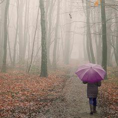 by mmarsupilami, via Flickr #autumn #rain #umbrella #forest