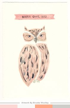 Cool owl water color.