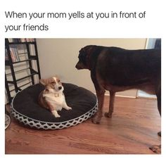 40 Funny Dog Pictures With Captions #DogPictures #funnydogwithcaptions