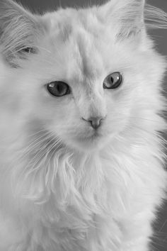 Cotier Cat, one of our fav models!