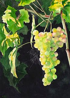 sunlit grapes by Anji