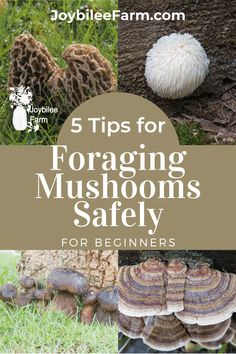 Use wisdom when foraging mushrooms in the wild, and take into account these five tips to help your mushroom foraging experience be the best possible. Avoid poisonous fungi, and find the easily identifiable safe and healthy mushrooms. Growing Mushrooms At Home, Garden Mushrooms, Wild Mushrooms, Stuffed Mushrooms, Poisonous Mushrooms, Aspen Leaf, Fungi, Oysters, Harvest