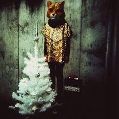 xmas fox ©pamela klaffke
