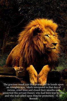 """I am no Daniel, but my God answers prayer, and I trust my God. 20When he had come near the den to Daniel, he cried out with a troubled voice. The king spoke and said to Daniel, """"Daniel, servant of …"""