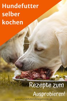 Cooking dog food yourself: great recipes to try out: GutesHundefutterOhneGetreide.de - Cook healthy dog food yourself. With very simple recipes that are quickly prepared and your d - Food Dog, Cat Food, Wrap Recipes, Baby Food Recipes, Simple Recipes, Dog Recipes, Dog Tattoos, Cat Tattoo, Pumpkin Recipes For Dogs