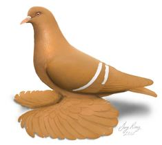 Dark Wings, Blue Wings, White Bar, Blue And White, Yellow, Black, Pink Pigeon, Pigeon Breeds, California Colors