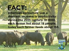 American agriculture saw a dramatic increase in productivity during the century. In each farmer fed about 19 people; today each farmer feeds about Agriculture Facts, American Agriculture, Farm Facts, Cow Facts, Farm Life Quotes, Ag Day, Summer Beach Quotes, Animal Science, Ag Science