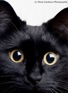 cute black cat shio neko Theo pic