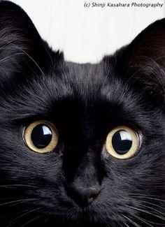 cute black cat shio neko Theo pic