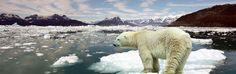 Klokkenluider onthult hoe klimaatdienst NOAA ons beduvelt over global warming - http://www.ninefornews.nl/klimaatdienst-noaa-beduvelt-global-warming/