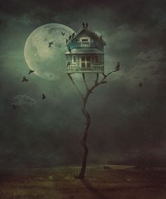 Bird House - Night Gathering - Nikolina Petolas (Print)