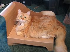 Diy Pet Furniture: Cardboard Cat Chaise
