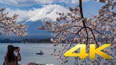 [Cinematic] Kawaguchiko Cherry Blossoms - Yamanashi -  河口湖 - 4K Ultra HD