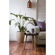 Foto 5 - Mesa Lateral Redonda Preta Maria - Orb Table, Furniture, Home Decor, Black Headboard, Home Decor Ideas, Decorating Ideas, Tray Tables, Centerpieces, Decoration Home
