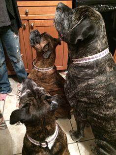 Green Bean, Salt And Water, Dog Design, Dogs, Animals, Green Beans, Animales, Animaux, Pet Dogs
