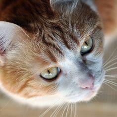 t i m m y . . . cat