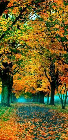 Esplendor De otoño