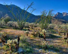 Desert Spring - Anza Desert by Pat Dwyer on 500px