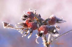 Тема Зима