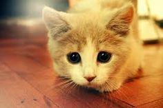 Rezultate imazhesh për animals cute