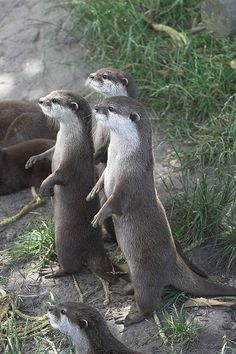 Seriously, who doesn't love otters!?