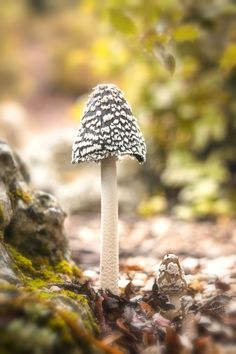 Mushroom by Alfonso Béjar on 500px