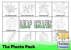 Discover the wonderful world of plants with our fantastic collection of teaching, activity and classroom display resources. Includes a child-friendly guide to plant growth, pollination, photosynthesis, classification, adaptation and much more! Science Curriculum, Science Resources, Activities, Holly Plant, Ivy Leaf, Child Friendly, Plant Growth, Classroom Displays, Photosynthesis