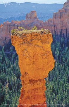 You'll experience the breathtaking views of Rainbow Point, Fairyland, and Natural Bridge in Bryce Canyon National Park on a tour of America's National Parks. #vantagetravel
