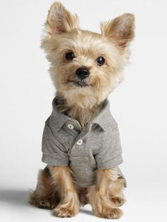 cd9322ec9 11 Best Boy Dog Fashion images